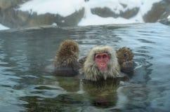 Macachi giapponesi nell'acqua delle sorgenti di acqua calda naturali fotografia stock libera da diritti