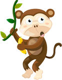 Macaco Foto de Stock