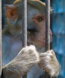 Macaco fotos de stock