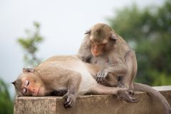 Macaco animal que senta-se no assoalho concreto Fotos de Stock