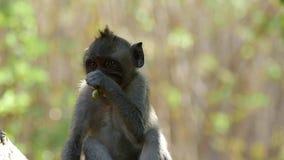 Macaco Bali FHD 96FPS FHD filme