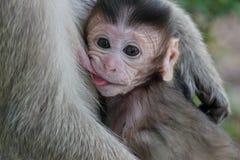Macaco bonito Fotografia de Stock Royalty Free