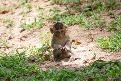 Macaco bonito Imagens de Stock Royalty Free