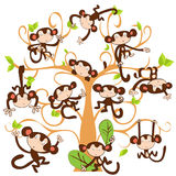 Macaco bonito agradável fotografia de stock royalty free