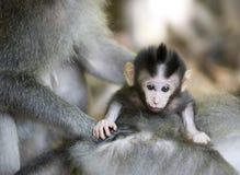 Macaco com bebê Fotografia de Stock Royalty Free