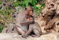 Macaco da mãe que abraça seu macaco do bebê Fotografia de Stock Royalty Free