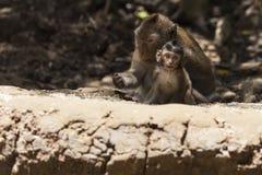 Macaco da mamã e do bebê foto de stock