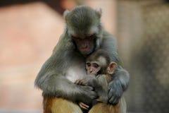 Macaco da matriz e do bebê Imagens de Stock