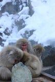 Macaco da neve da família Imagens de Stock Royalty Free