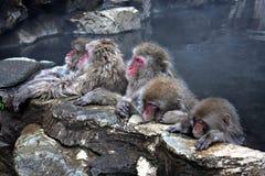 Macaco da neve em Jigokudani perto de Nagano, Japão imagens de stock