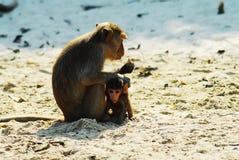 Macaco da praia Foto de Stock Royalty Free