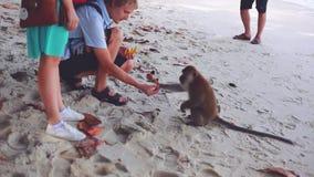 Macaco de alimentação dos pares felizes na praia do macaco em Malásia 1920x1080 video estoque