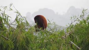 Macaco de furo da fauna mono vídeos de arquivo