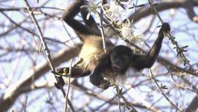 Macaco de furo selvagem que come uma flor filme