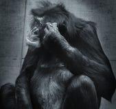 Macaco de pensamento Foto de Stock Royalty Free
