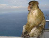 Macaco di Barbary - trascura il Mediterraneo Immagini Stock Libere da Diritti