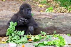 Macaco do bebê Imagens de Stock Royalty Free