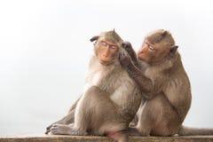 Macaco do bebê que senta-se no concreto Foto de Stock Royalty Free