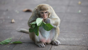 Macaco e bebê, macaco Imagens de Stock