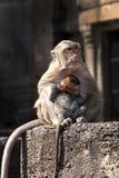 Macaco e criança da matriz Fotografia de Stock Royalty Free
