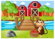 Macaco e cubeta das maçãs no pomar Fotografia de Stock Royalty Free