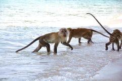 Macaco e a equipe imagens de stock