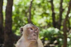 Macaco e a floresta foto de stock