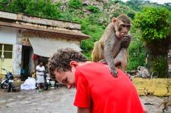 Macaco em minha parte traseira fotos de stock royalty free