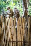 Macaco em Tailândia imagens de stock