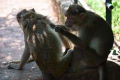 Macaco em trabalhos de casa foto de stock royalty free