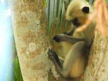 Macaco em uma cara triste fotos de stock