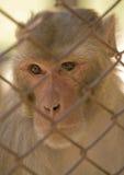 Macaco em uma gaiola Fotos de Stock