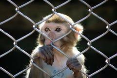 Macaco em uma gaiola Fotografia de Stock Royalty Free