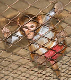 Macaco em uma gaiola Imagem de Stock