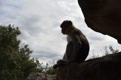 Macaco em uma pedra fotografia de stock