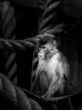Macaco em uma rede Fotografia de Stock Royalty Free