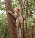 Macaco engraçado Fotografia de Stock