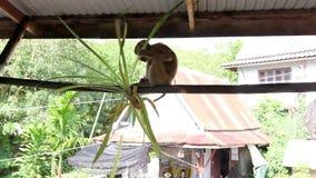 Macaco engraçado vídeos de arquivo