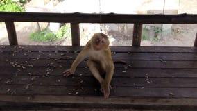 Macaco engraçado video estoque