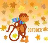 Macaco engraçado sob as folhas de bordo Fotografia de Stock Royalty Free