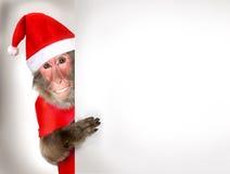 Macaco engraçado Santa Claus que guarda a bandeira do Natal Fotografia de Stock Royalty Free