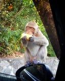 Macaco feliz imagem de stock