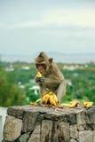 Macaco feliz Fotos de Stock