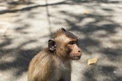 Macaco furado fotografia de stock