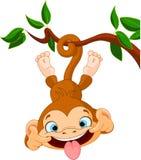Macaco hamming Foto de Stock Royalty Free