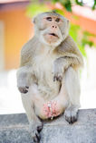 Macaco impertinente 5 imagens de stock
