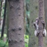 Macaco japonês Fotografia de Stock