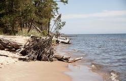 Macaco Kolka do ¡ de Ð, golfo de Riga As árvores encontram-se na água na costa o Fotos de Stock Royalty Free