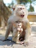 Macaco-mãe e macaco-bebê fotografia de stock royalty free