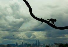 Macaco na cidade Imagens de Stock